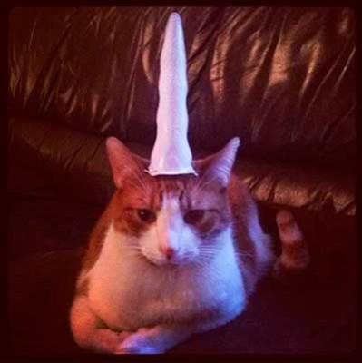 unicornhorn_cat_2